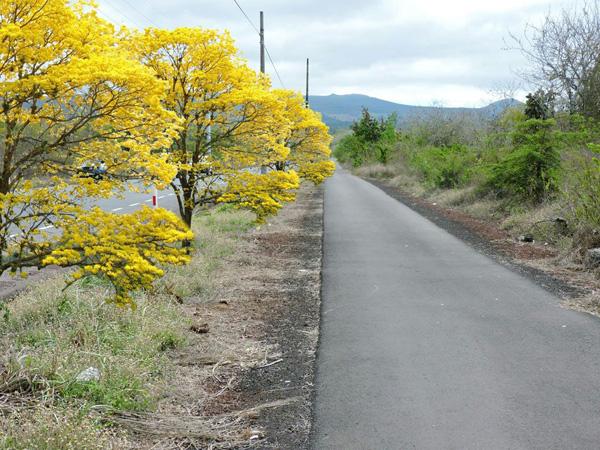 Galápagos con árboles nativos