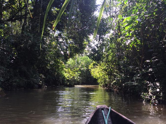 Los bosques, poderosos aliados para enfrentar el cambio climático ...
